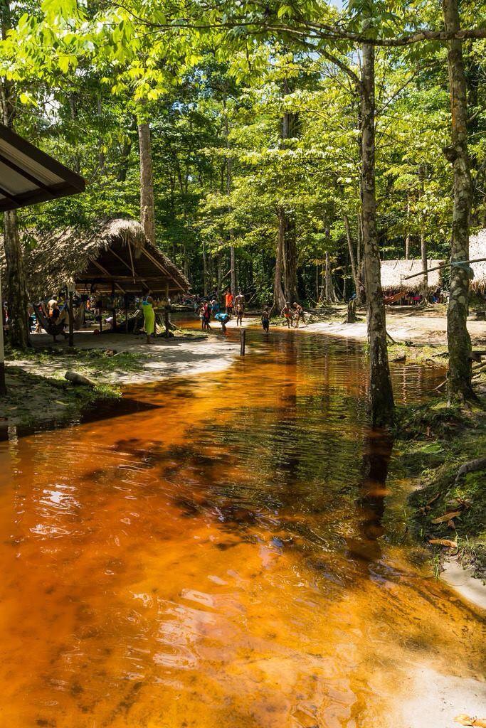 Surinaamse natuur