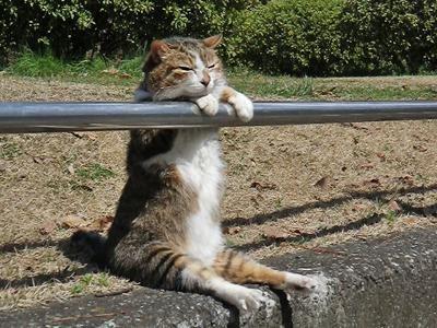 【画像】 どういうことなの・・・!? 沿道にたたずむネコの座り方がヤバい - 〓 ねこメモ 〓
