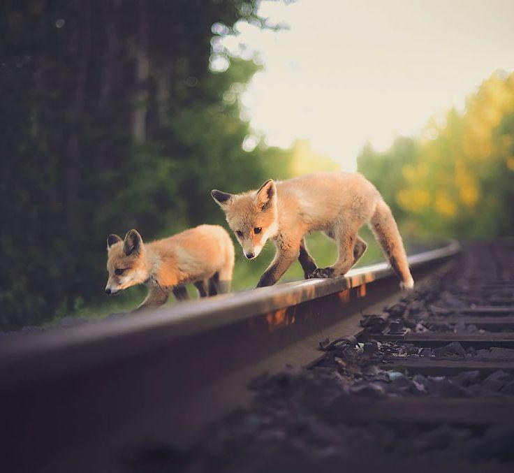 fotos-alimentando-animales-salvajes-finlandia-konsta-punkka-2 (14)