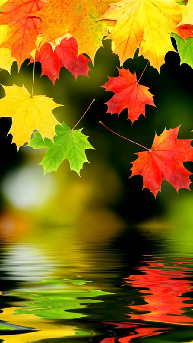 A kaleidoscope of color...the beauty of autumn <3