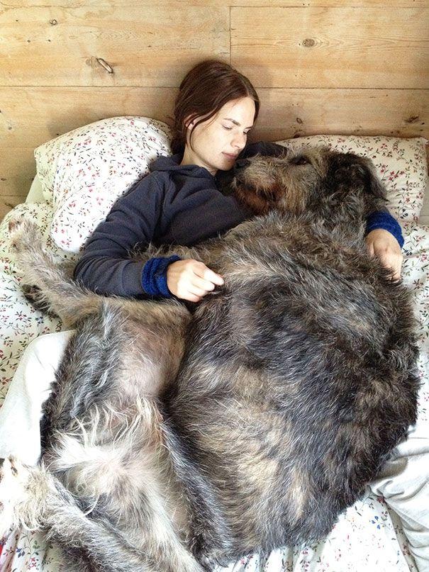 Máme rádi psy | Největší psi světa - toto není fotomontáž