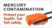 "Mercury Contamination: IT""S NOT JUST FISH!"