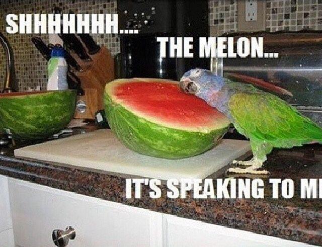Parrot Loves Watermelon Funny Animals Funny Birds Animal Captions