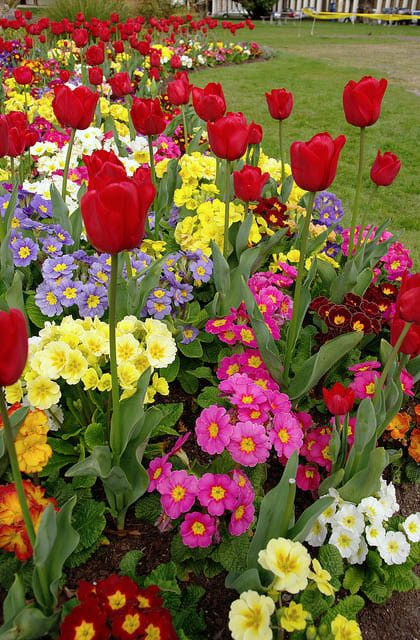 Spring Pictures - Beautiful Spring Flower Garden.