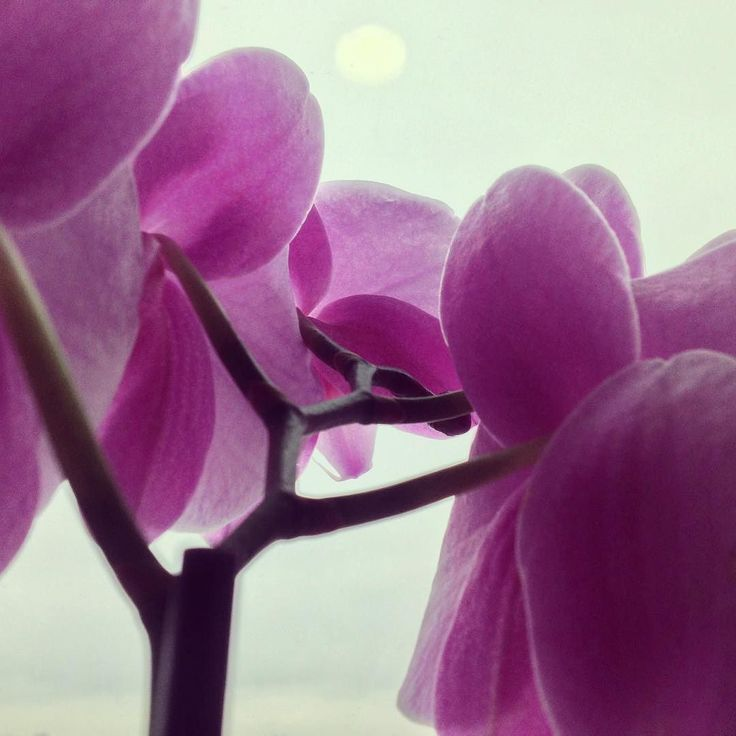 the orchids at my moms hospital window  #flowers #flower #orchids #orchid #pink #photography #photos @enricovarrasso