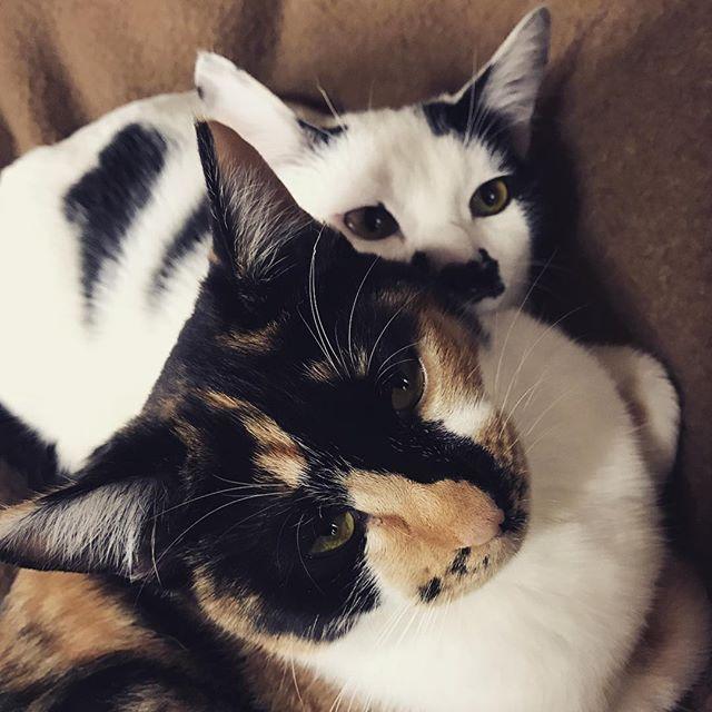 #ねこ部 #ねこのいるくらし #ねこずきさんと繋がりたい #ねこ #cat #cute #お昼寝 #お昼寝中 #ねこあつめ #猫 #愛猫 #猫好きさんと繋がりたい #猫好きな人と繋がりたい#兄妹猫 #兄妹 #きなこ #ちょび #ちょび髭 #ひげ猫 #ひげ #仲良し猫 #仲良しかよ#pet#sweets #cutegirl #boy#mycat🐱 #mycat😻