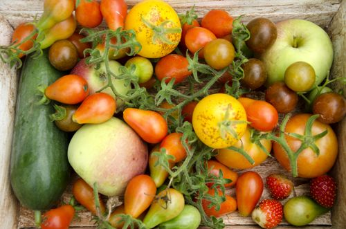 grønne tomater, gule tomater, røde tomater, agurk, jordbær