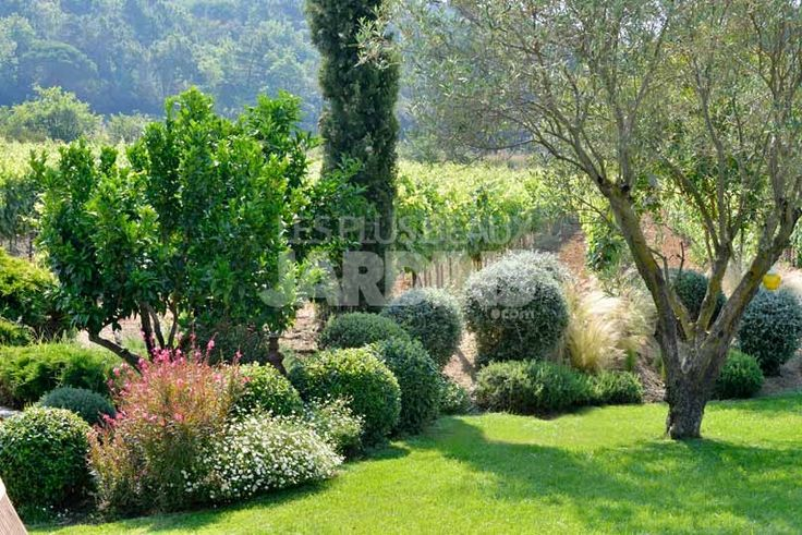 Massif avec Arbuste persistant, Vigne Derbez  aménagement ...