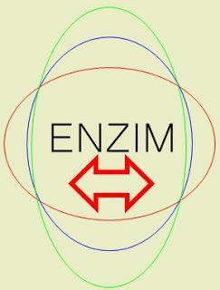 bioselpedia: Enzim, pengertian enzim, cara kerja enzim