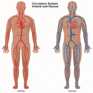 HomeoCity: Blood Vessel And Lymphatic Disorders