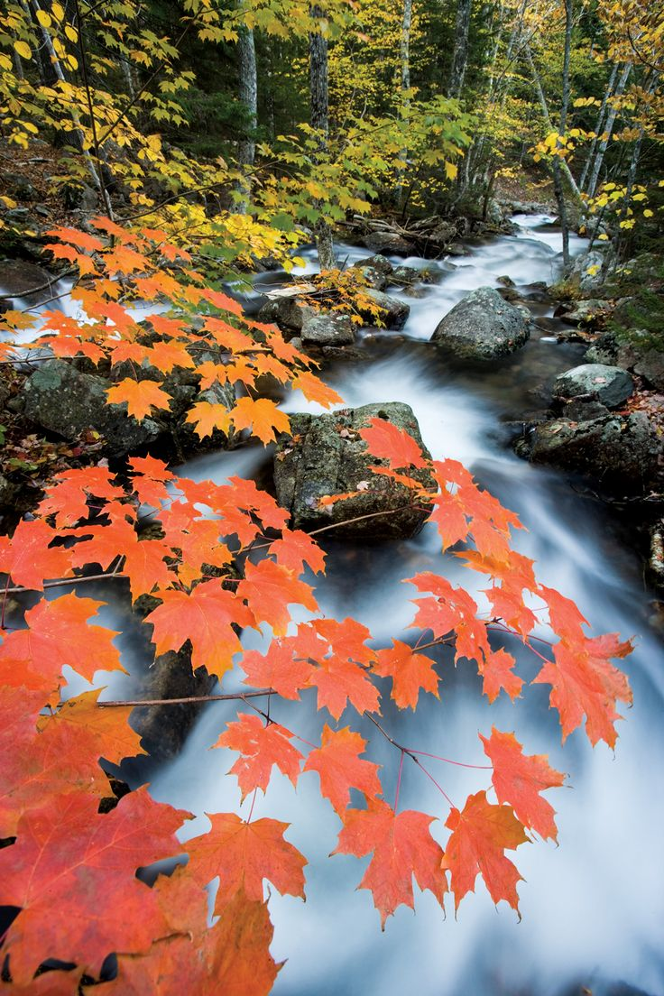 Jordan Stream rushes through the forest of Acadia National Park. By Jerry & Marcy Monkman, for our 2017 Maine Engagement Calendar. Calendars available in our online store: downeast.com/calendars