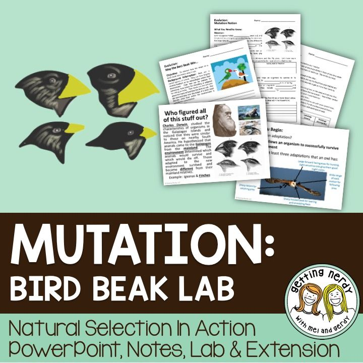 "Students discover how mutations lead to adaptation and subsequently led to the development of Charles Darwin's theory of evolution as they take notes and watch a (hyperlinked) short BBC video. Then, students will demonstrate evolution by natural selection with our spin on the bird beak lab ""May the Best Beak Win."""