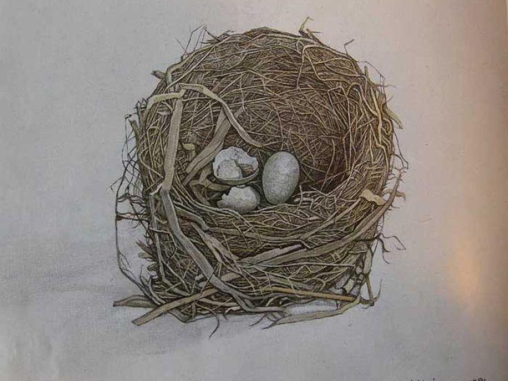 Het merel nest  Jopie Huisman