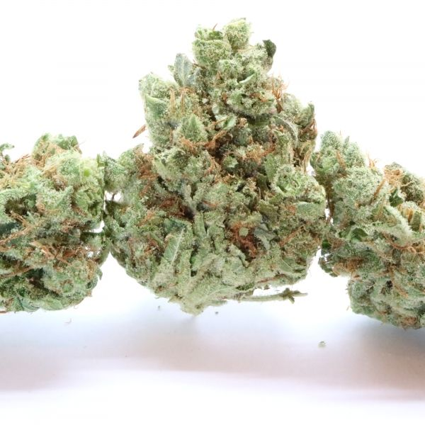 THC 16-23% CBD 1.07%  Oregon Golden Goat was created when a male Hawaiian-Romulan pollinated with a female Island Sweet Skunk; it's a very powerful sativa-dominant hybrid with a ratio of 70:30. The nugs are pale green and glimmer in resinous crystals. It has faint and a sweet and subtle note of tropical aromas.