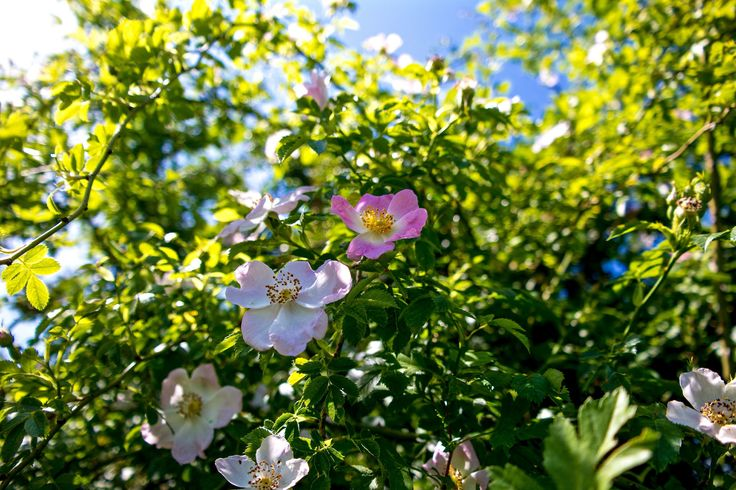 https://flic.kr/p/tsbHGm | Májusi virágok
