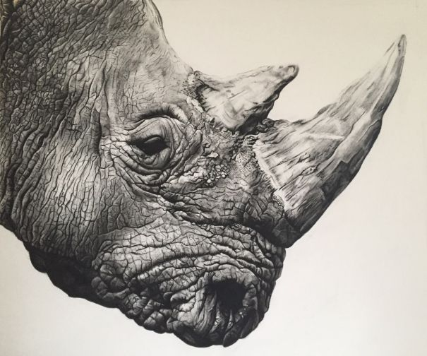 Northern White Rhino by Violet Astor. Drawing. Available for Sale.