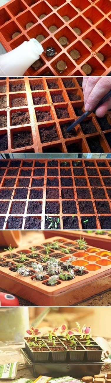 all-garden-world: Start Seeds at Home with a Seed Starter Kit