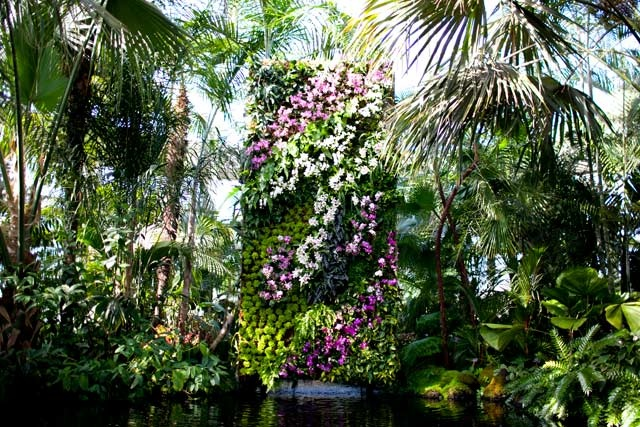 10 Best Images About Flowers On Pinterest Singapore Purple Orchids And Blue Orchids