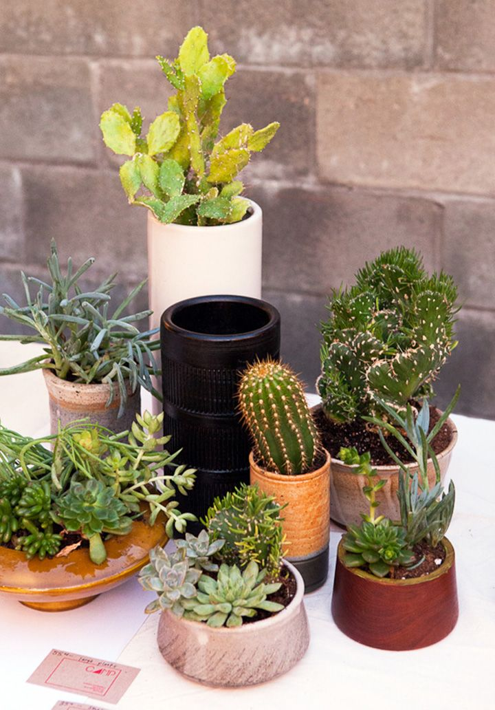 Exceptional Cactus Plants Are Wonderful Feng Shui Cures, But Not Inside The Home. Their  Spines