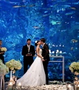 See the full size image at http://partymotif.com #Aquarium #Wedding #Cyan #Blue #Aqua #Tiffany #Coral #Reef #Ocean #Party #Motif #Nautical #Yacht #Boat #Fish #Dolphin #Whale #Centerpiece #Flowers #Sea #Seashells #Beach #Lake #Water #Aquatic #Underwater #Swim #Swimming #Mermaid #Cookies #Cupcakes #Candy #Formal #Fashion #Seaweed #Algae #Sharks #Sealife #Marine #Marina #Docks #Bay #River #Stream #Sand #Sandcastle #Weddingcake