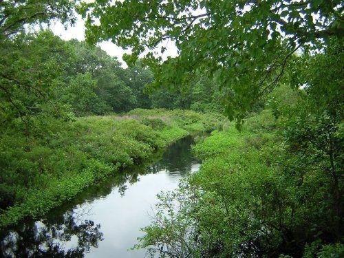 Revelation13.net: The Bridgewater Triangle and Hockomock Swamp in Massachusetts