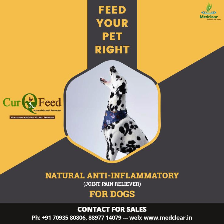 """Feed your Pet Right. CurQFeed """"Water Soluble Curcumin"""