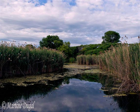 Peaceful reeds by Martine