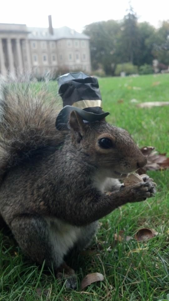 """""""Four squirrels and seven years ago…"""" 