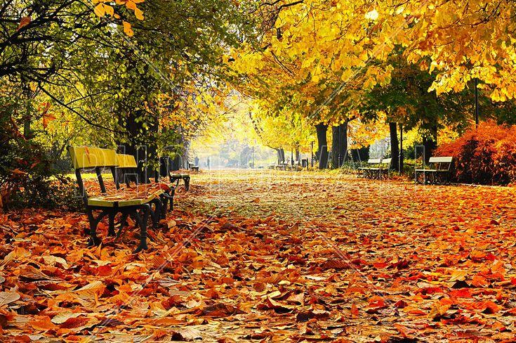 Autumn Park - Wall Mural & Photo Wallpaper - Photowall