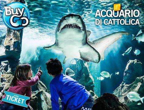 Ingresso all'Acquario di Cattolica x1 persona! Squali, Pinguini, Tartarughe e Meduse sono solo alcuni dei tanti protagonisti di questo luogo... da non perdere! Valido fino al 6 Gennaio!