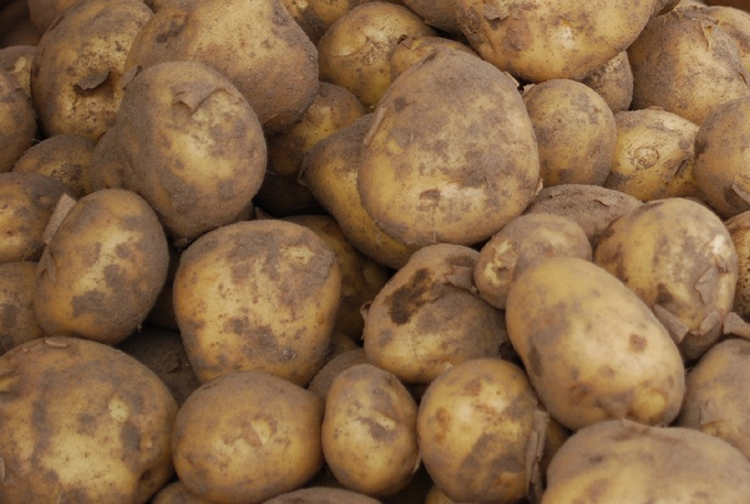 One third of the potatoes in Finland come from Kristinestad / Kristiinankaupunki! (Photo: Kajsa Snickars)