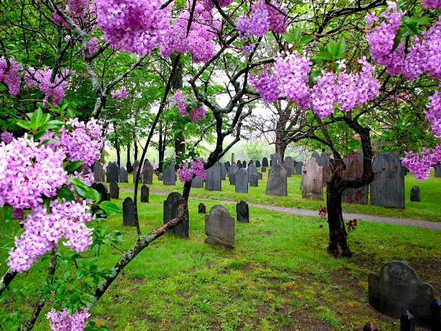 """I can imagine all these dead ones rising in the resurrection in such a pretty garden.   """"The hour is coming in which all those in the memorial tombs will hear his voice and come out...""""—John 5:28, 29"""