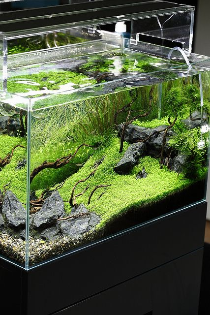 beautiful.  Green Aqua Showroom by viktorlantos, via Flickr