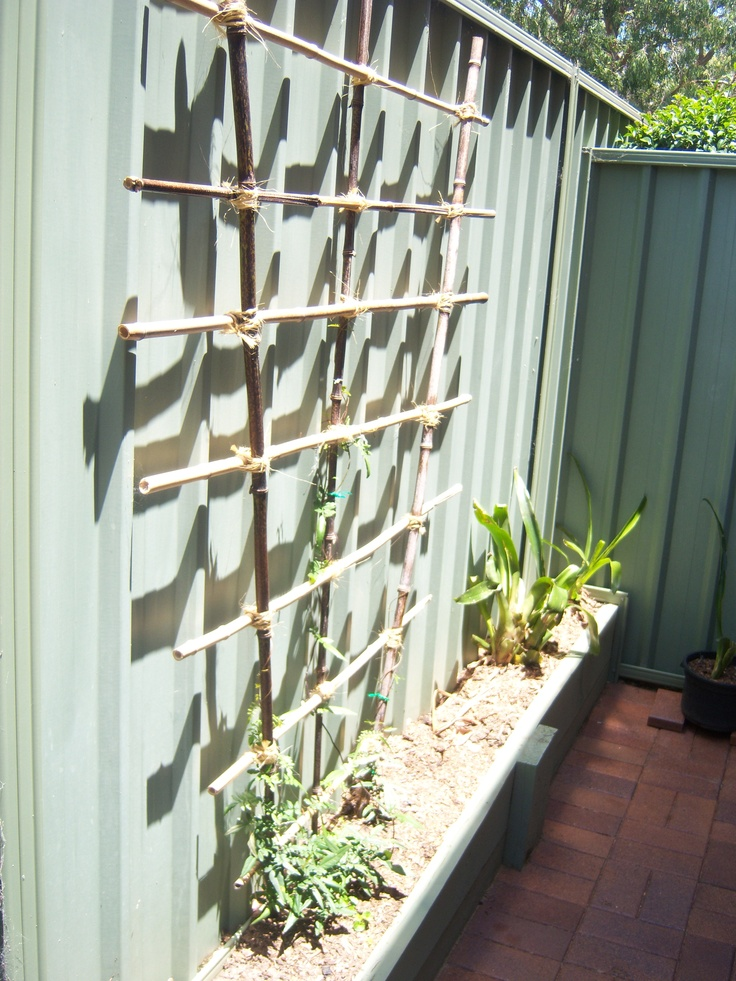 "Black bamboo trellis. Trellis lashed together with garden twine. Growing Wonga Wonga vine ""Pandorea pandorana"" on trellis with Australian native violet ""Viola hederacea"" underneath in the bed. I will load better photo(s) later."