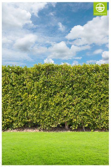 Verbind het groen: alle tuintjes samen! Veel dieren kunnen niet vliegen of klimmen en verplaatsen zich enkel over de grond. Ommuurde tuinen zijn dan ook zo goed als onbereikbaar. Kies voor een natuurlijke haag of maak een doorgang in je omheining om egels, kikkers of padden door te laten.