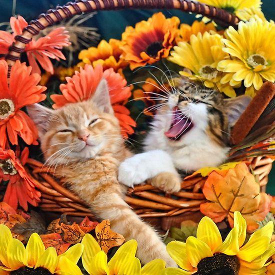Image result for autumn kitty