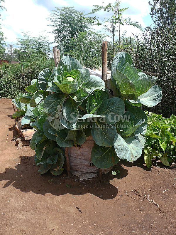Огород в мешке по-африкански | Сад и огород | Постила