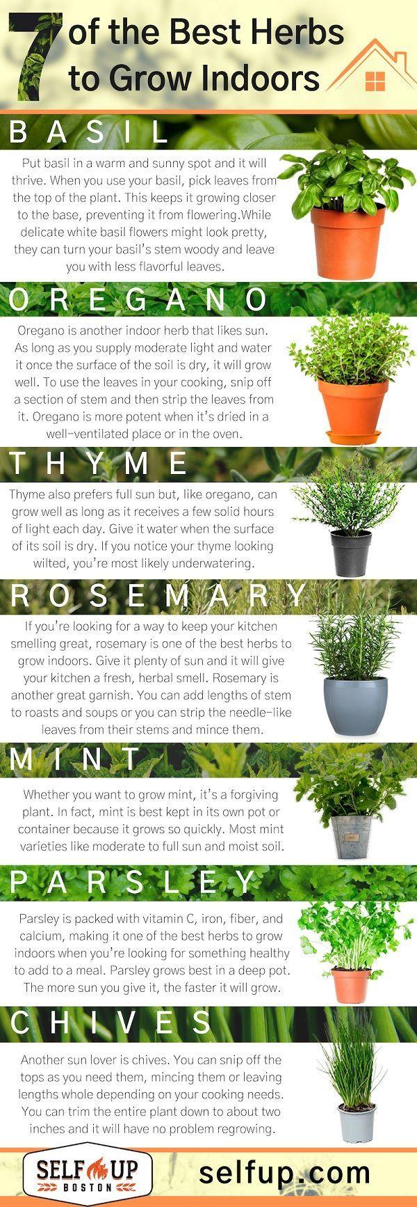 9 of the Best Herbs to Grow Indoors   Growing herbs indoors, Best ...