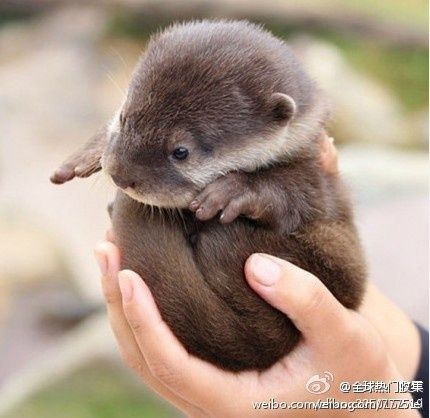 Baby Otters #animals #cute #funny #animallovers #animalpics #Animals,…