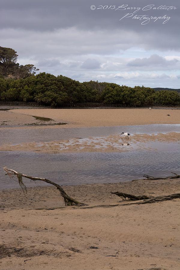 The mouth of Screw Creek at Inverloch, Victoria, Australia