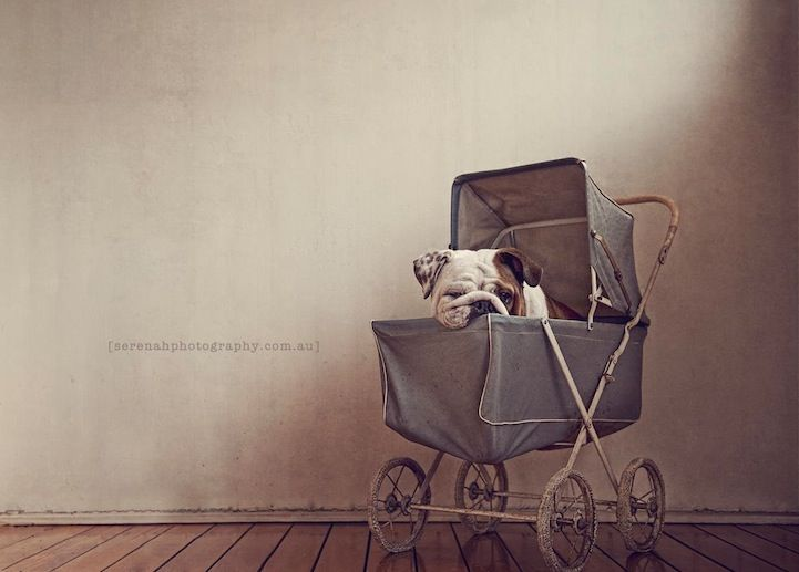 Exclusive Interview with Serenah, the Creative Pet Photographer - My Modern Metropolis