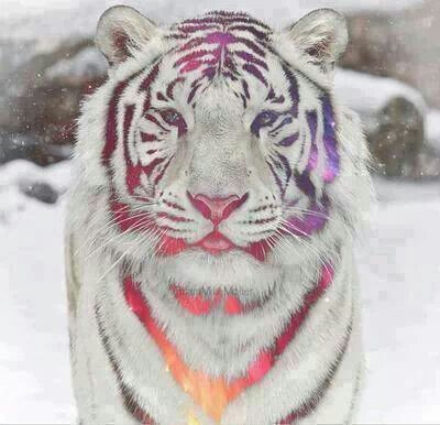 White tiger galaxy colorful