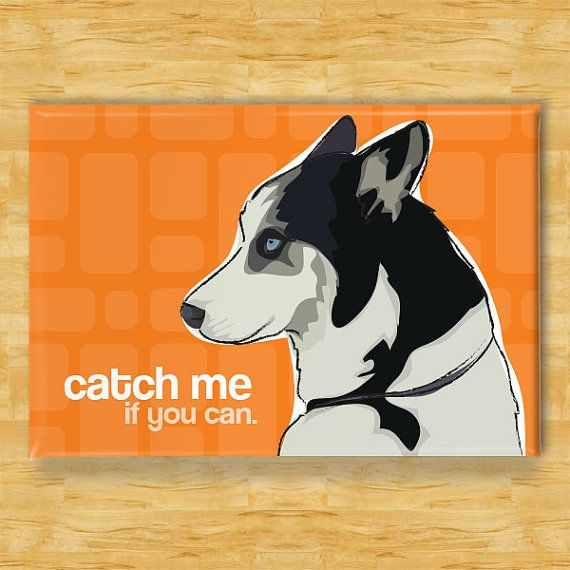 Husky Magnet - Catch Me If You Can - Siberian Husky Gifts Refrigerator Fridge Dog Magnets on Etsy, $5.99