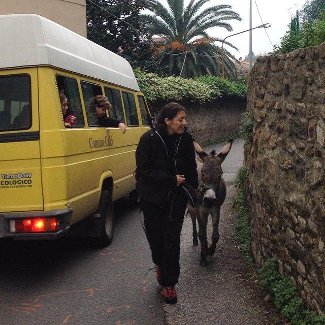 A passo d'#asino - #Calci #MontePisano