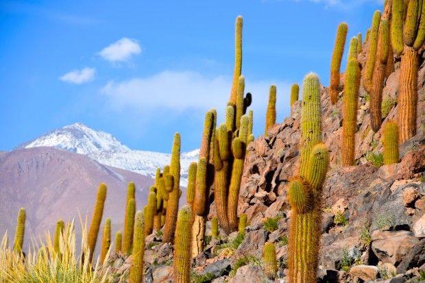 EXPLORANDO O DESERTO DO ATACAMA - Escolhi 6 aventuras diferentes oferecidas pelo Hotel Explora para conhecer o Atacama.