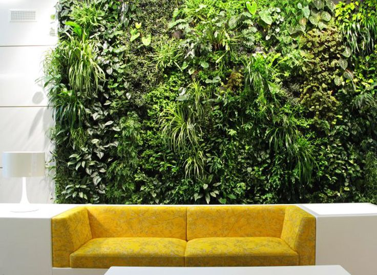 Why Create A Living Wall In Your Garden, Home Or Office?   Living Walls And  Vertical Gardens