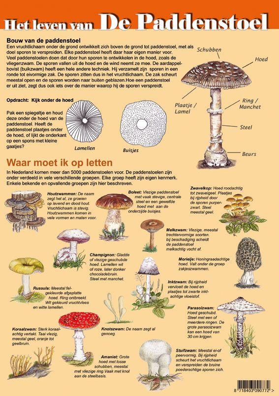 Educatieve kaart: het leven van de Paddenstoel, http://iturl.nl/sndME
