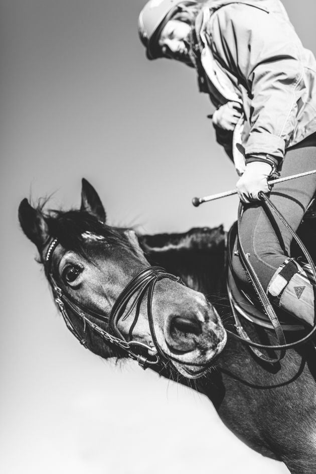 Horse and Equine Photography Cheltenham and Gloucester