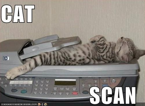 Hubby had a CAT Scan the other day. I told him to say hello to the kitties. =)