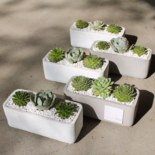 "Succulent ""Thank You"" arrangements by Dalla Vita located in Santa Barbara"